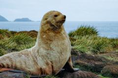 Antarctic-Mammals-8
