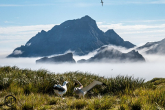 Antarctic-and-Sub-Antarctic-landscanpes-31