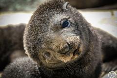 Antarctic-Mammals-11