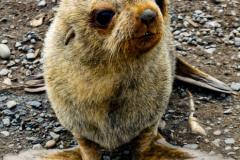 Antarctic-Mammals-12