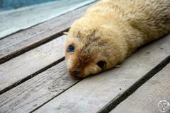 Antarctic-Mammals-13