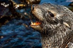 Antarctic-Mammals-15