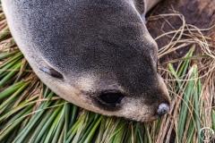 Antarctic-Mammals-23