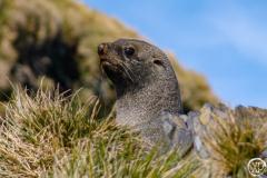 Antarctic-Mammals-9