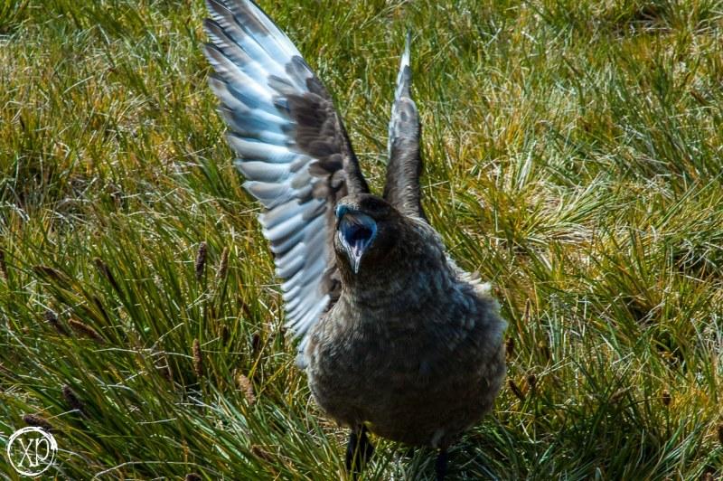 Antartic-Seabirds-17