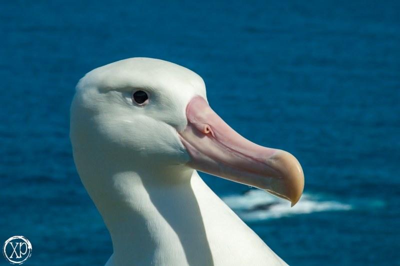 Antartic-Seabirds-26