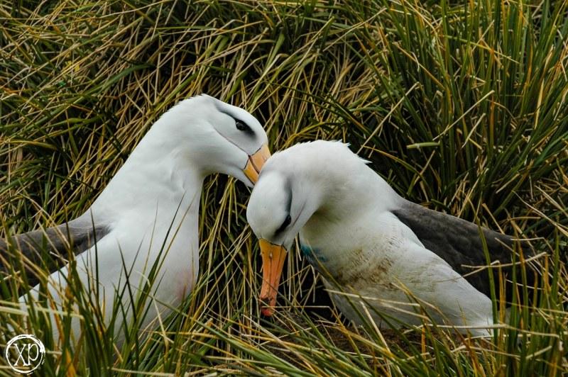 Antartic-Seabirds-8