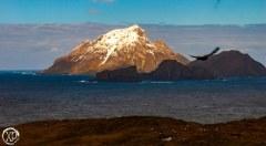Antartic-Seabirds-12