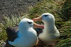 Antartic-Seabirds-14