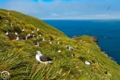 Antartic-Seabirds-16