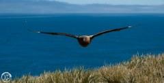 Antartic-Seabirds-18