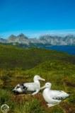 Antartic-Seabirds-23