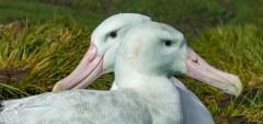 Antartic-Seabirds-24
