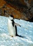 Antartic-Seabirds-4