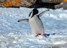 Antartic-Seabirds-5