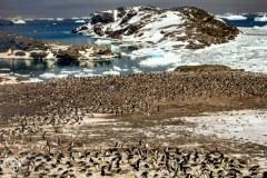 Antartic-Seabirds-6