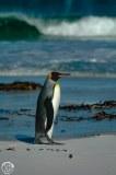 Antartic-Seabirds-