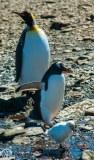 Antartic-Seabirds-21