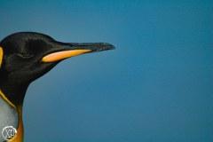Antartic-Seabirds-3
