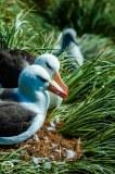 Antartic-Seabirds-39