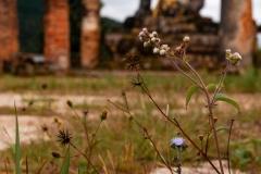 Laos-5423