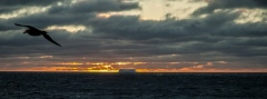 Antarctic-and-Sub-Antarctic-landscanpes-2